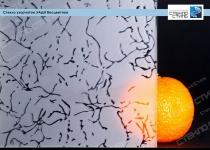 Стекло узорчатое Уади бесцветное фото